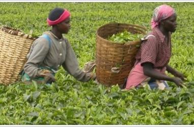 Banco Mundial exige ações para reduzir impacto do clima na África