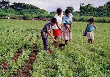 Agricultores familiares vão fornecer alimentos para rede de ensino e entidades socioassistenciais no Ceará